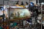 Large scale Photographs of Underwater Miniatures